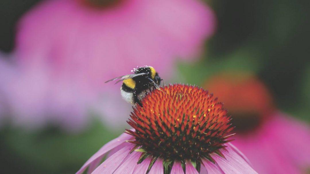Bee Pollen for Healthy Hormones