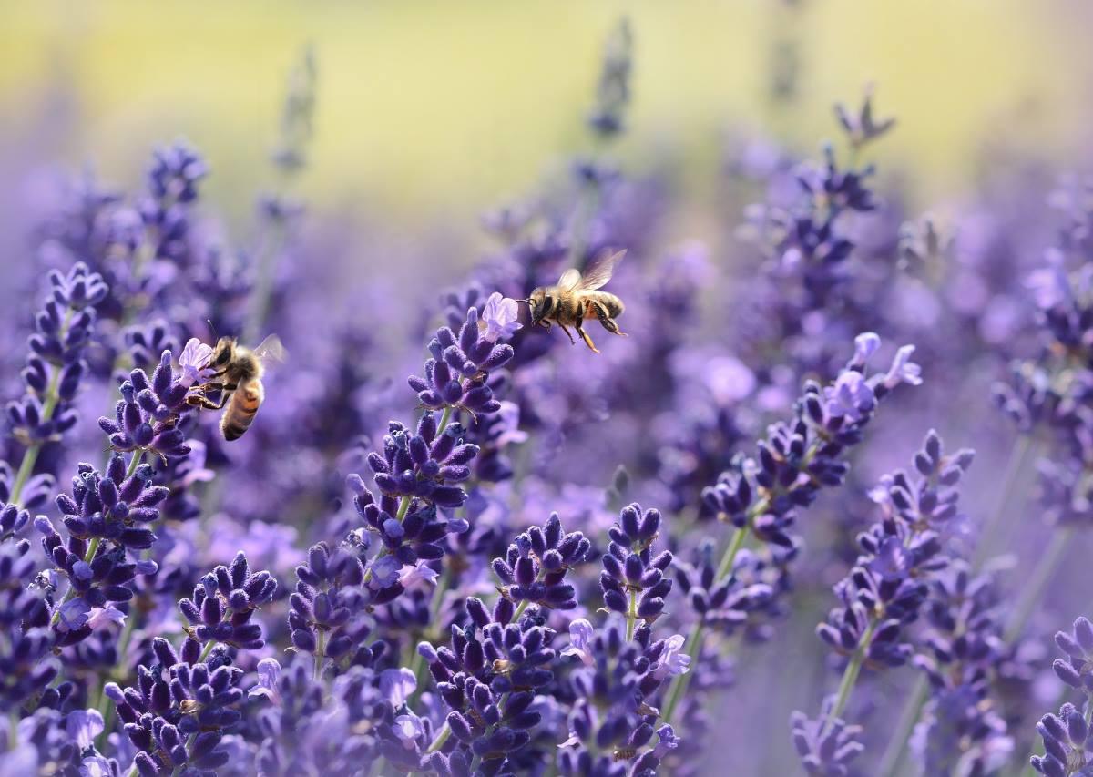 The Buzz of Bee Pollen