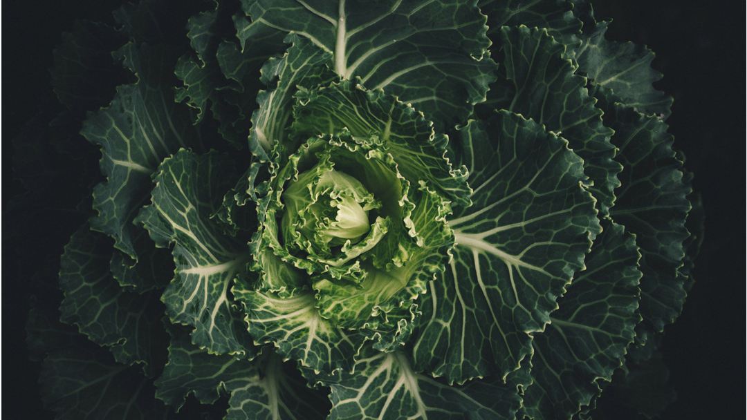 Why Vitamin K Is the Next Vitamin D